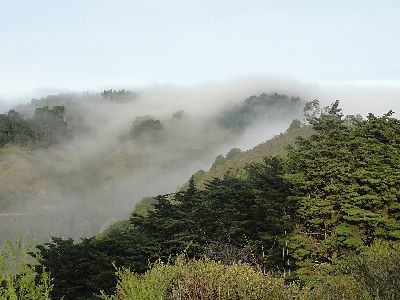 a blanket of fog is enveloping the ridge of Claremont Canyon. the trees are still visible and lush green