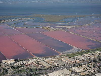 an overhead view of the salt flats in the south bay of San Francisco. the pools are rectangular and bright pink, with some dark swirls. in the distance is a marsh and the Bay, in the foreground are industrial buildings and a freeway