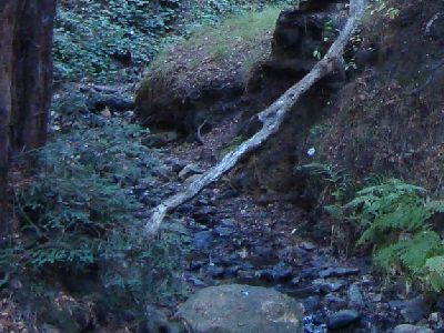a creek bed through Leona Canyon with rounded dark stones