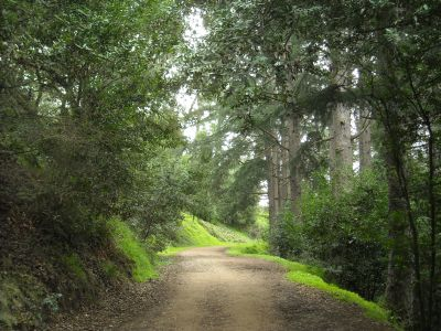 a tree lined trail through strawberry canyon. the leaves are dark green and the grass alongside the wide path is bright green